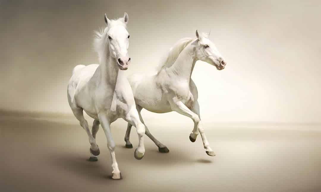 حصانين